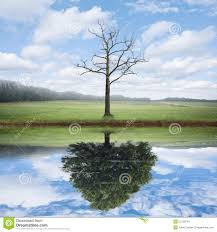 reflection of and new tree stock photo image 52759744