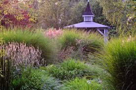 gardening with grasses perennial