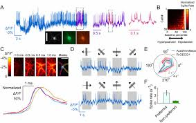 high speed recording of neural spikes in awake mice and flies with
