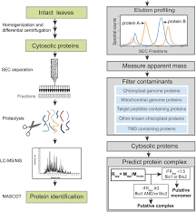native plants of massachusetts a proteomic strategy for global analysis of plant protein