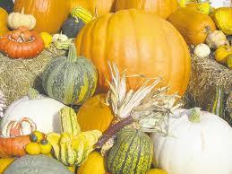 pumpkin pickin winnipeg free press homes