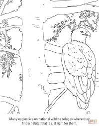 bald eagle coloring page free printable coloring pages