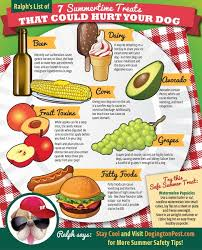 infographic 7 summertime treats that could hurt your dog the