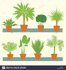 home plants green palms bushes in pots set vector background