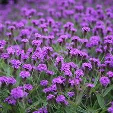 77 best garden ideas images on pinterest garden ideas flower