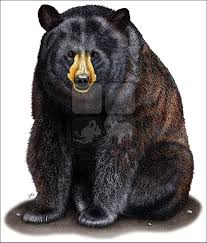 american black bear ursus americanus art color