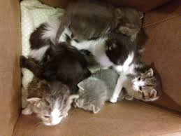 the tails of nine orphaned kittens the creative cat