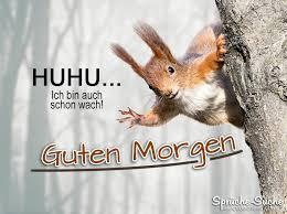 sprüche morgen guten morgen sprüche mit eichhörnchen sprüche suche