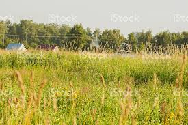 Flowers Near Me - meadow with yellow wild flowers near houses in rural areas stock