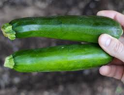 69 best vegetable gardening tips the frugal girls
