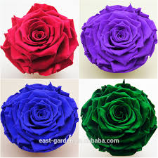 list manufacturers of small red rose buy small red rose get