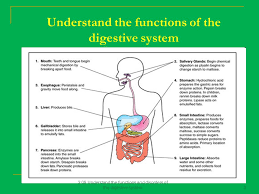 2 08 understand the functions and disorders of the digestive