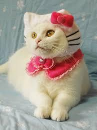 Cat Halloween Costumes Cats Pah Halloween Safety Tips Pet Parents