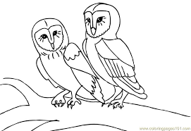 coloring pages owl birds free printable page online bebo pandco
