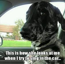 Dog Driving Meme - funny dog in the car meme