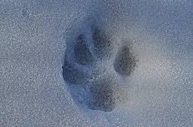 dog paw print free image peakpx