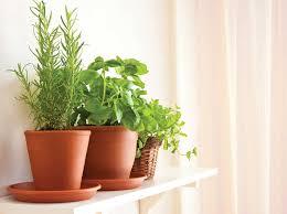 Indoor Herbal Garden Garden Increasing The Design Composition By Growing Herbs Indoor