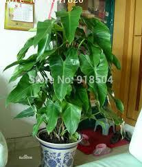 Indoor Vine Plants Online Buy Wholesale Live Indoor Plants From China Live Indoor