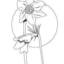 poppy coloring pages hellokids com