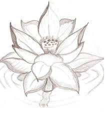19 lotus flower gallery lotus flower drawing cliparts co