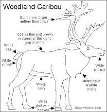 caribou printout enchantedlearning