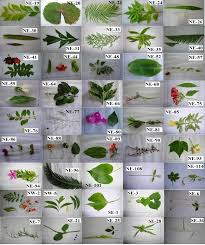 different ornamental plants with their unique code number