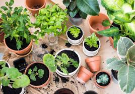 10 easy to care for houseplants best pick reports