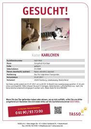 Tierheim Bad Segeberg Strassentiger Nord E V Hilfe Für Freilebende Katzen