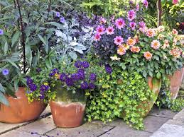 Idea Garden Container Garden Design Design Ideas