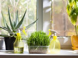 Best Plant For Bathroom by 6 Ways To Humidify Your House Without A Humidifier Diy Network