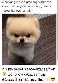 Too Cute Meme Face - image result for girlfriend mad pomeranian meme i pom poms