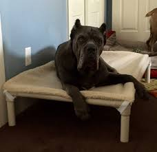 Best Dog Bed For Chewers Cane Corso Dog Beds Kuranda Dog Beds
