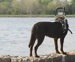 Leader Dogs For The Blind Jobs Types Of Service Dogs Anything Pawsable