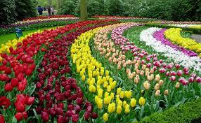 keukenhof flower festival 22 mar 13 may 2018 lisse