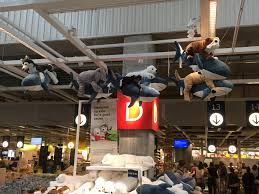 ikea dogs the world u0027s most recently posted photos of ikea and sharks