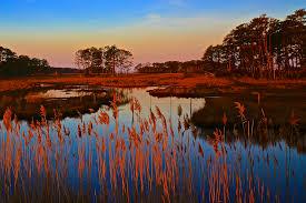 chesapeake bay native plants march 2017 chesapeake bay foundation blog