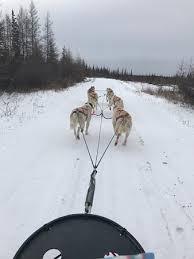 Dog sledding Wapusk Adventures Churchill Traveller Reviews