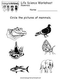 3rd grade science worksheets u2013 wallpapercraft