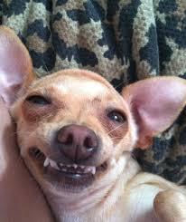 Dog Smiling Meme - the top ten dingus dog breeds of all time barkpost