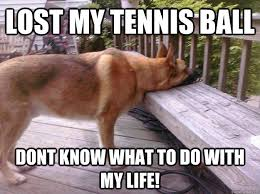 Lost Dog Meme - lost my tennis ball dont know what to do with my life first