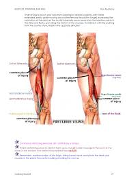 Anatomy Of Shoulder Muscles And Tendons Muscles Tendons And Will