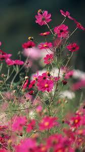 flower wallpaper for nokia x nature little pink flower branch iphone 6 wallpaper iphone