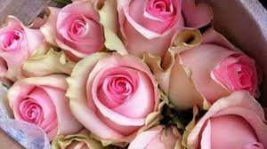 flower companies best bulb flower delivery companies jackson and perkins flower