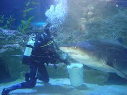 aquarium design specialist mike murphy architectural designer