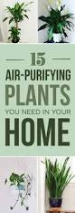 Indoor Plant Design by Best 10 Indoor Plant Decor Ideas On Pinterest Plant Decor