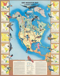 Map North America Print Collection Migration Map Of North American Birds 1910