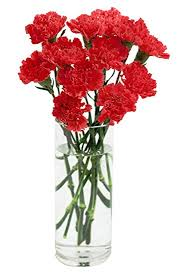 carnation bouquet carnation bouquet 12 stems with vase