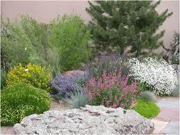 Bushes For Landscaping Backyard Landscaping Backyard Inspirational Backyard Bushes