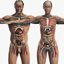 Female Anatomy Image 23 Best Female Anatomy Images On Pinterest Human Anatomy