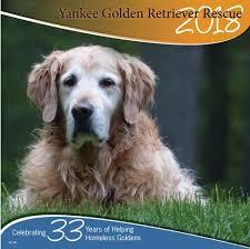where to buy a calendar where to buy a 2018 ygrr calendar yankee golden retriever rescue inc